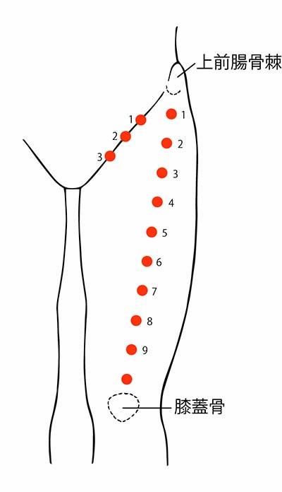図2. 鼠径部3点、大腿前側10点
